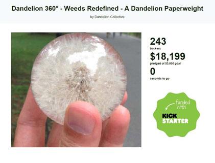 dandelion-kickstarter
