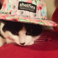 Shelfies-hat